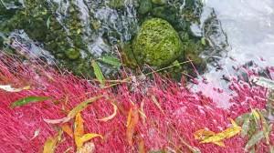 安曇野湧水群公園の柳の根