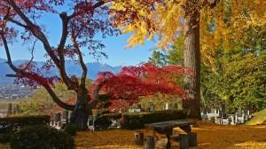 長福寺のイチョウとカエデの紅葉